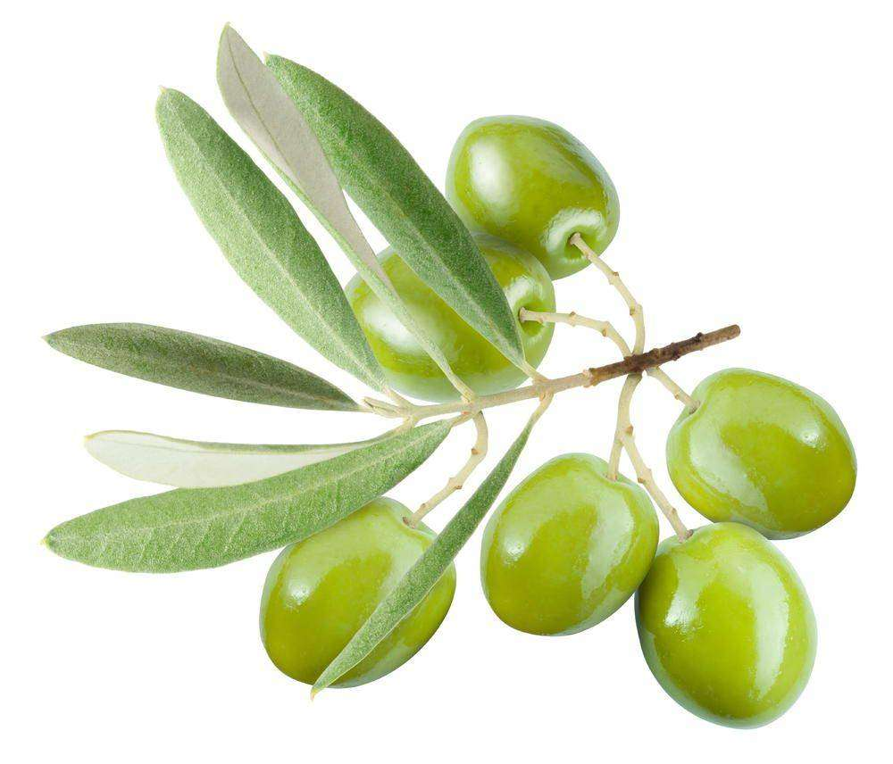 Оливки или маслины в чём разница и польза? Разновидности 93