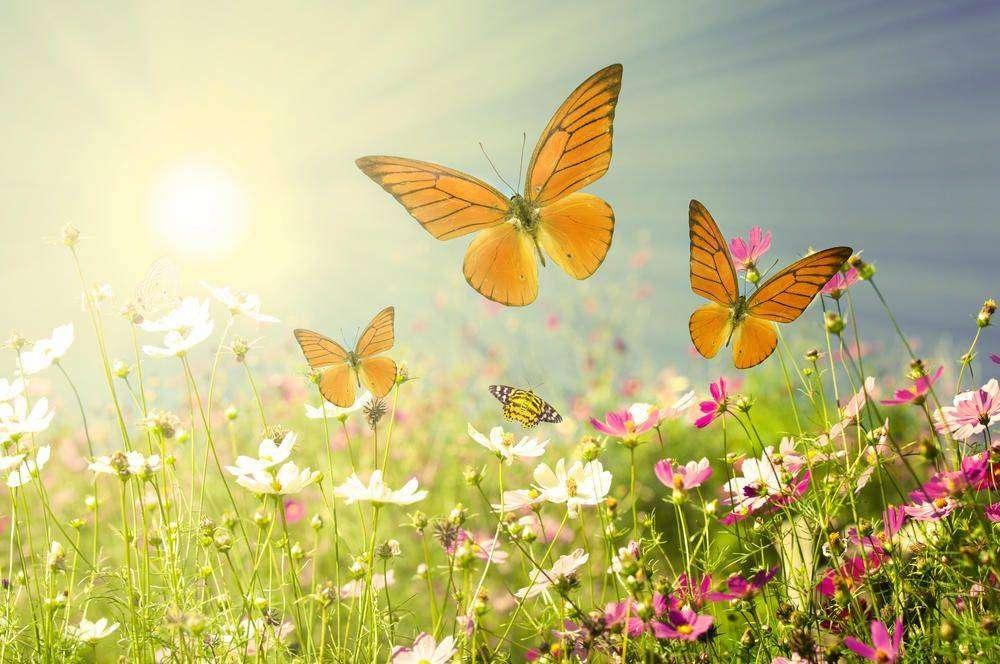 Рисунки о природе и цветах