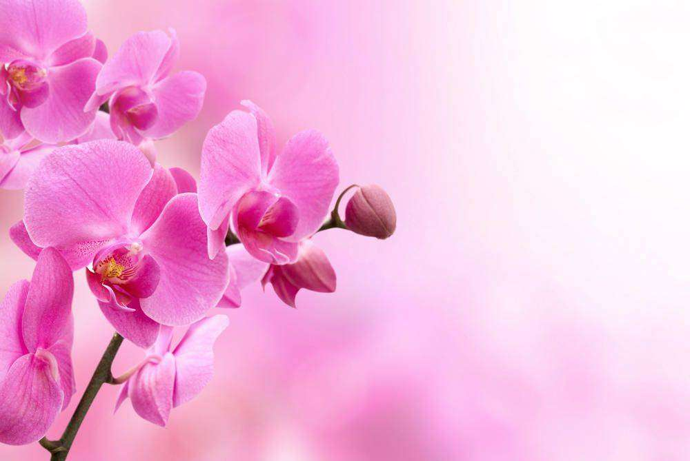 Цветы из шторы