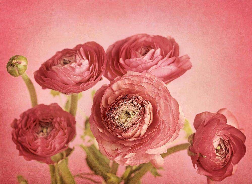 Картина Гарний букет №5140. Галерея  Квіти  23b6ac599397d