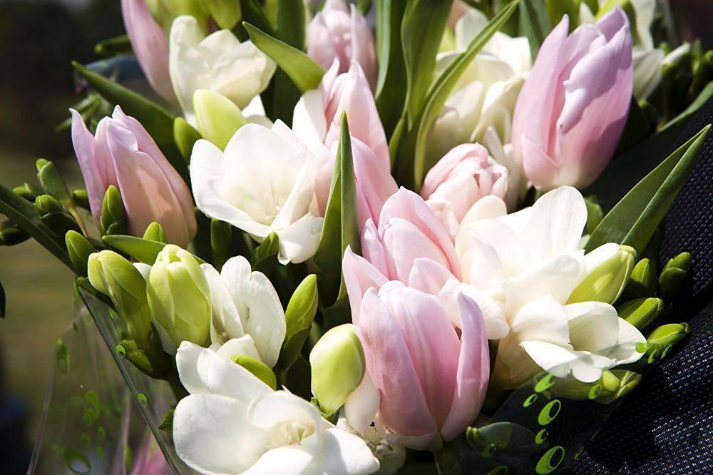 Картинки по запросу фото весняних  квітів