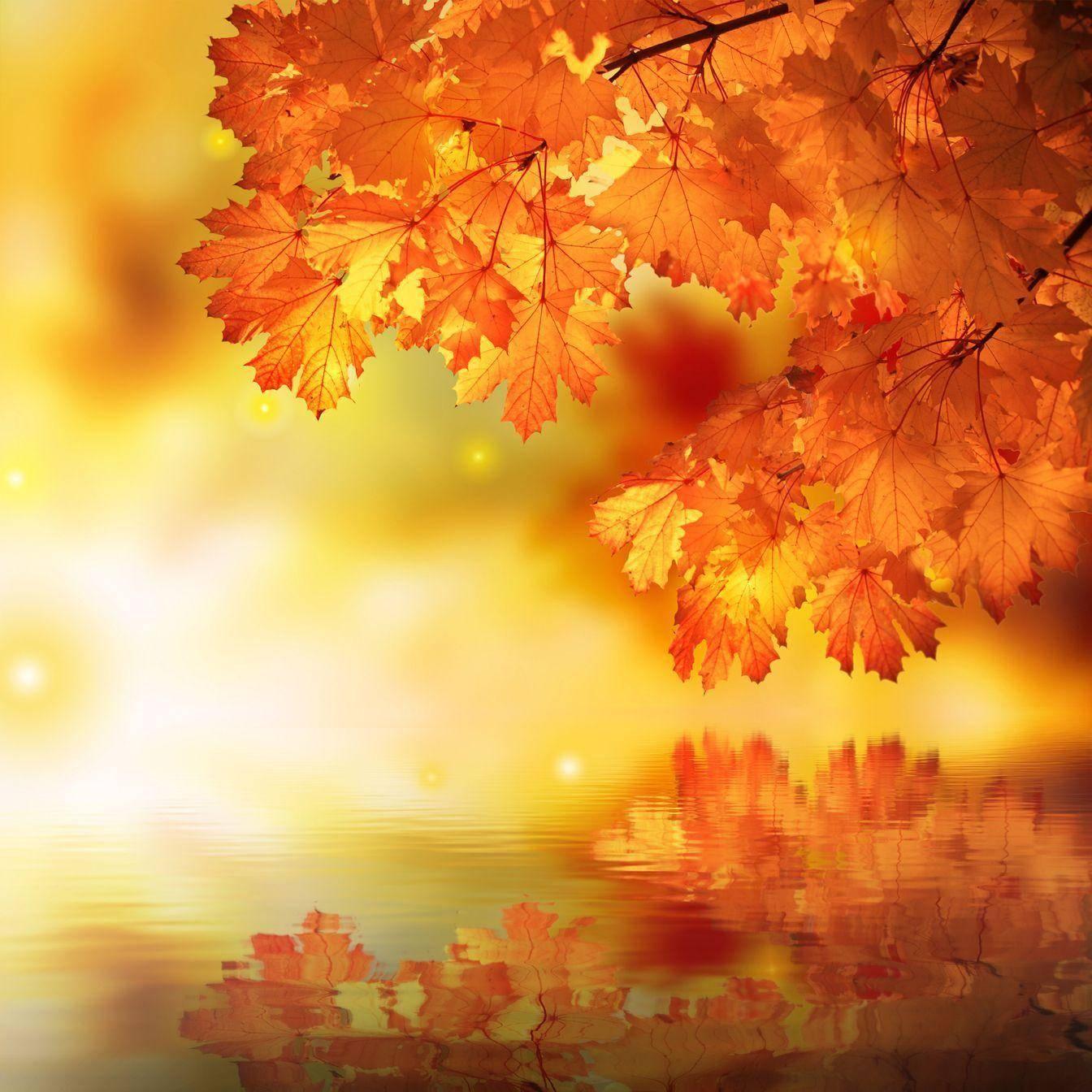 Осенние листья на открытках, про мытье окон