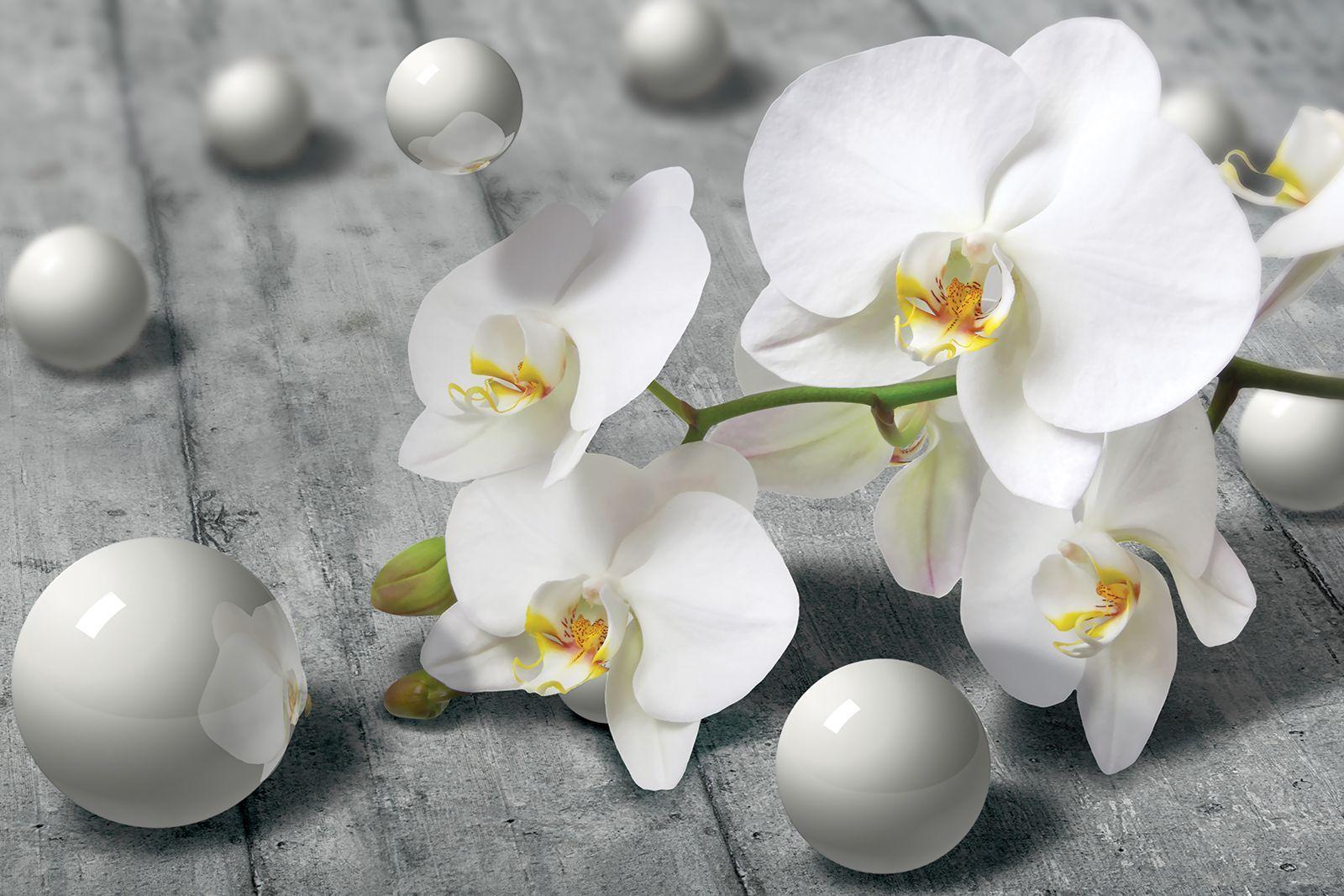 картинка белой орхидеи на сером фоне время
